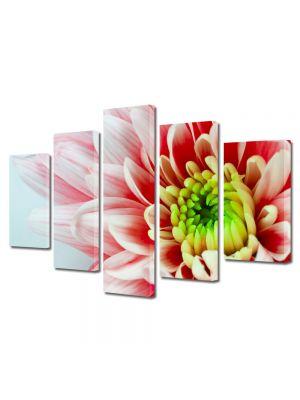 Set Tablouri Multicanvas 5 Piese Flori Floare alb cu rosu