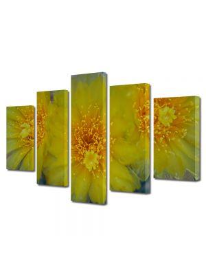 Set Tablouri Multicanvas 5 Piese Flori Flori galbene de cactus