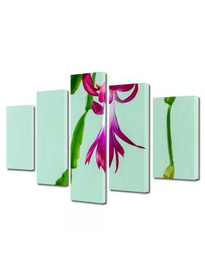 Set Tablouri Multicanvas 5 Piese Flori Cactus de craciun