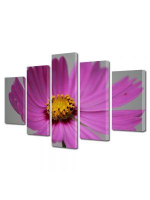 Set Tablouri Multicanvas 5 Piese Flori Floare Cosmo
