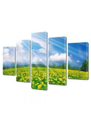 Set Tablouri Multicanvas 5 Piese Flori Camp de papadii