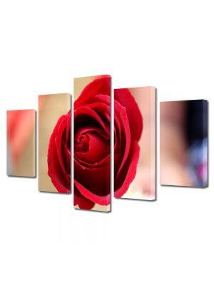Set Tablouri Multicanvas 5 Piese Flori Fir de trandafir rosu