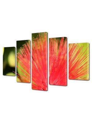 Set Tablouri Multicanvas 5 Piese Flori Floare aparte