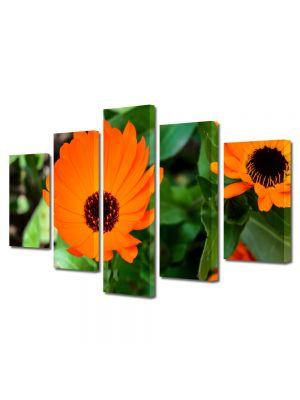 Set Tablouri Multicanvas 5 Piese Flori Flori portocalii