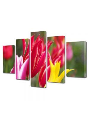 Set Tablouri Multicanvas 5 Piese Flori Flori colorate