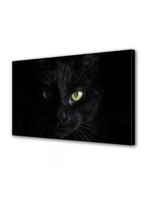 Tablou Canvas Halloween Pisica cu ochi verzi