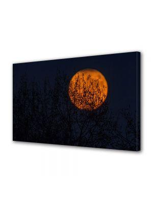 Tablou Canvas Halloween Luna rosie peste copaci