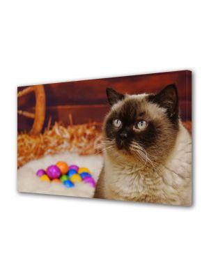 Tablou Canvas Sarbatori Paste Pisica langa oua colorate