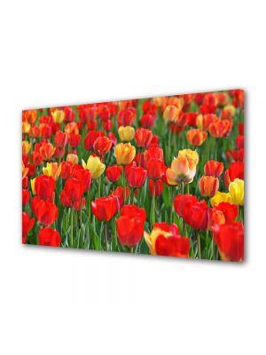 Tablou Canvas Peisaj Lalele rosii si galbene