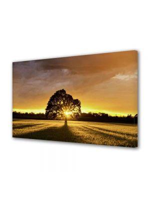 Tablou Canvas Peisaj Ascuns dupa copac