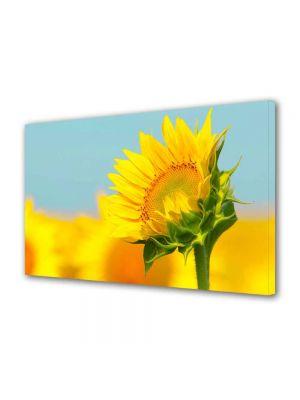 Tablou Canvas Peisaj Pui de floarea soarelui