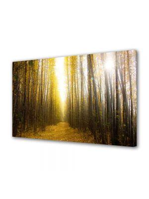Tablou Canvas Peisaj Lumina puternica