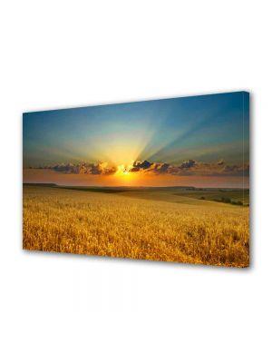 Tablou Canvas Peisaj Apus peste lanul de grau