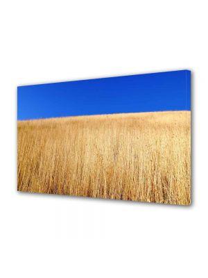 Tablou Canvas Peisaj Lan de grau sub cerul albastru
