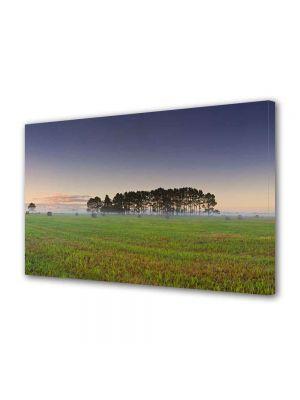 Tablou Canvas Peisaj Palc de copaci