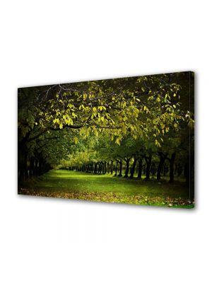 Tablou Canvas Luminos in intuneric VarioView LED Peisaj Copaci verzi