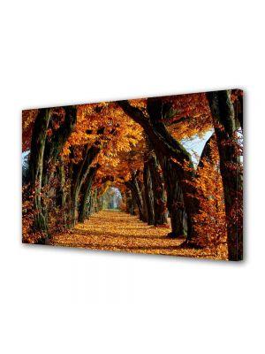 Tablou Canvas Peisaj Tunel de toamna