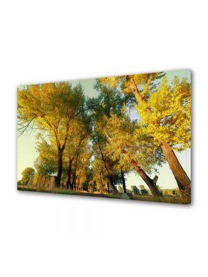 Tablou Canvas Peisaj Perspectiva copaci