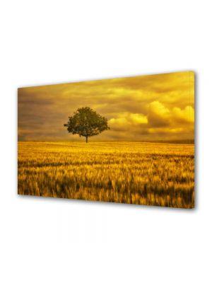 Tablou Canvas Peisaj Campie portocalie