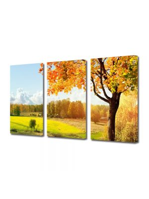 Set Tablouri Multicanvas 3 Piese Peisaj Toamna pe campie