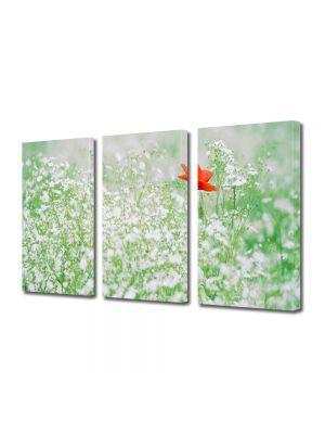Set Tablouri Multicanvas 3 Piese Peisaj Floare rosie