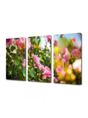 Set Tablouri Multicanvas 3 Piese Peisaj Trandafiri roz