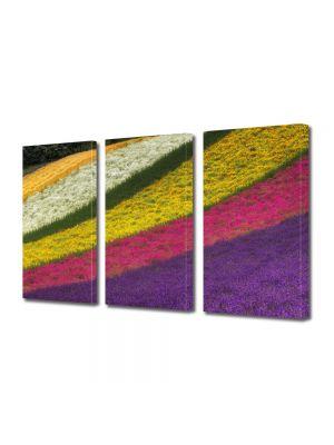 Set Tablouri Multicanvas 3 Piese Peisaj Lanuri colorate