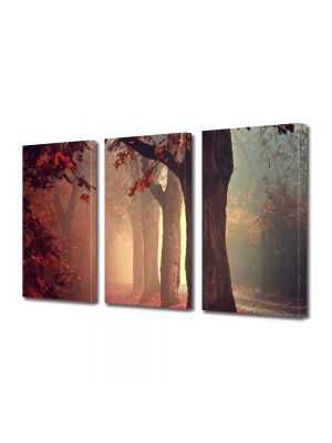Set Tablouri Multicanvas 3 Piese Peisaj Ceata in padure