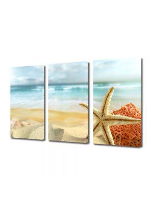 Tablou Canvas Peisaj Scoici pe plaja