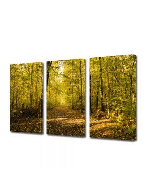 Set Tablouri Multicanvas 3 Piese Peisaj Vine toamna