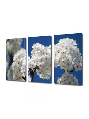 Set Tablouri Multicanvas 3 Piese Peisaj Buchete de flori albe