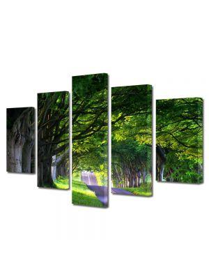 Set Tablouri Multicanvas 5 Piese Peisaj Umbre de copaci batrani