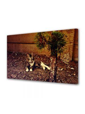 Tablou Canvas Luminos in intuneric VarioView LED Vintage Aspect Retro Pisica curioasa