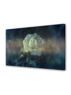 Tablou Canvas Vintage Aspect Retro Trandafir alb vintage