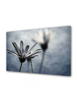 Tablou Canvas Vintage Aspect Retro Flori delicate argintii
