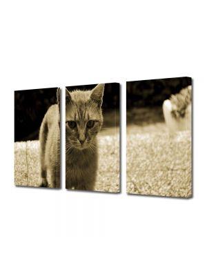 Set Tablouri Muilticanvas 3 Piese Vintage Aspect Retro Pisica in tonuri retro