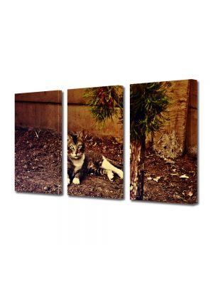 Set Tablouri Muilticanvas 3 Piese Vintage Aspect Retro Pisica curioasa