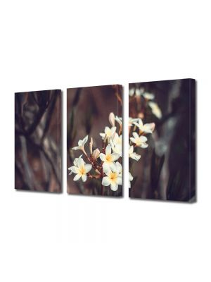 Set Tablouri Muilticanvas 3 Piese Vintage Aspect Retro Flori albe tropicale