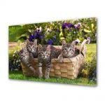 Tablou Canvas Animale Pisici in cos