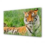 Tablou Canvas Luminos in intuneric VarioView LED Animale Tigru odihnindu-se