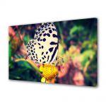 Tablou Canvas Animale Fluture dalmatian