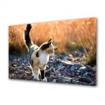 Tablou Canvas Luminos in intuneric VarioView LED Animale Pisica in gradina