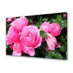 Tablou Canvas Luminos in intuneric VarioView LED Flori Trandafirii sunt roz