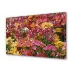Tablou Canvas Flori Aglomeratie de flori