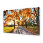 Tablou Canvas Peisaj Umbre de copaci