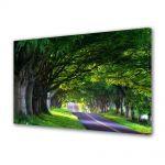 Tablou Canvas Luminos in intuneric VarioView LED Peisaj Umbre de copaci batrani