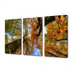 Set Tablouri Multicanvas 3 Piese Peisaj Doi copaci de jos