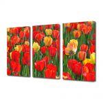 Set Tablouri Multicanvas 3 Piese Peisaj Lalele rosii si galbene