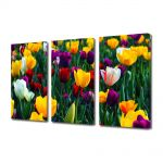 Set Tablouri Multicanvas 3 Piese Peisaj Lalele Colorate