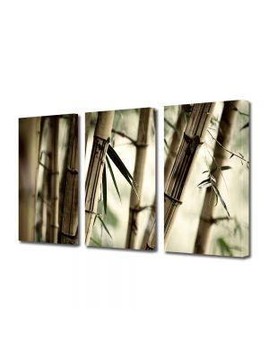 Set Tablouri Multicanvas 3 Piese Abstract Decorativ Bambus